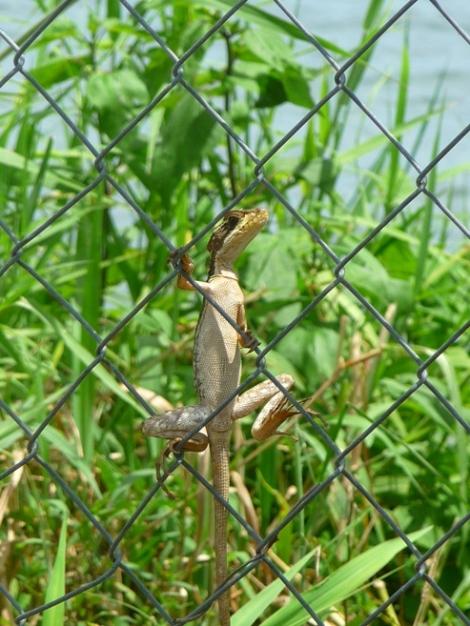 reptile enjoying the sun